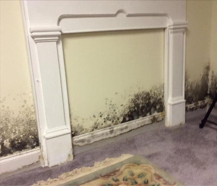 Basement Flood Causes Mold Growth Before