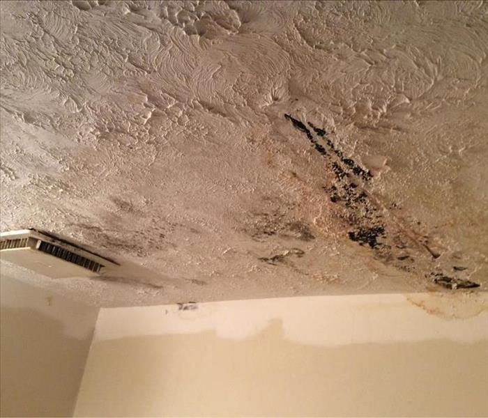Roof Leak Leads to Mold in Ceiling