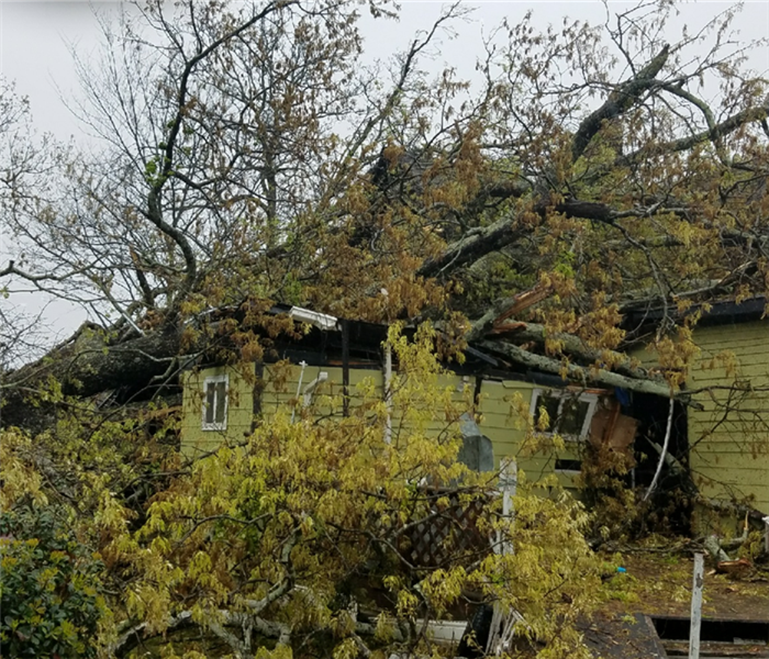 Tree Nearly Destroys Home