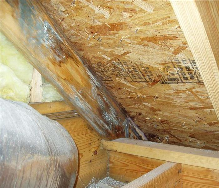 Mold Remediation Is Mold Hiding In Your Attic?