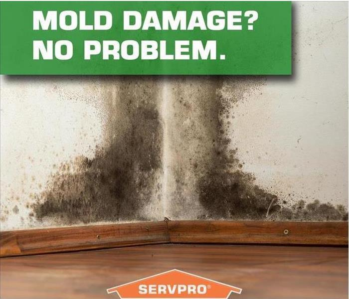 Mold Remediation How to Prevent Mold in Your Home